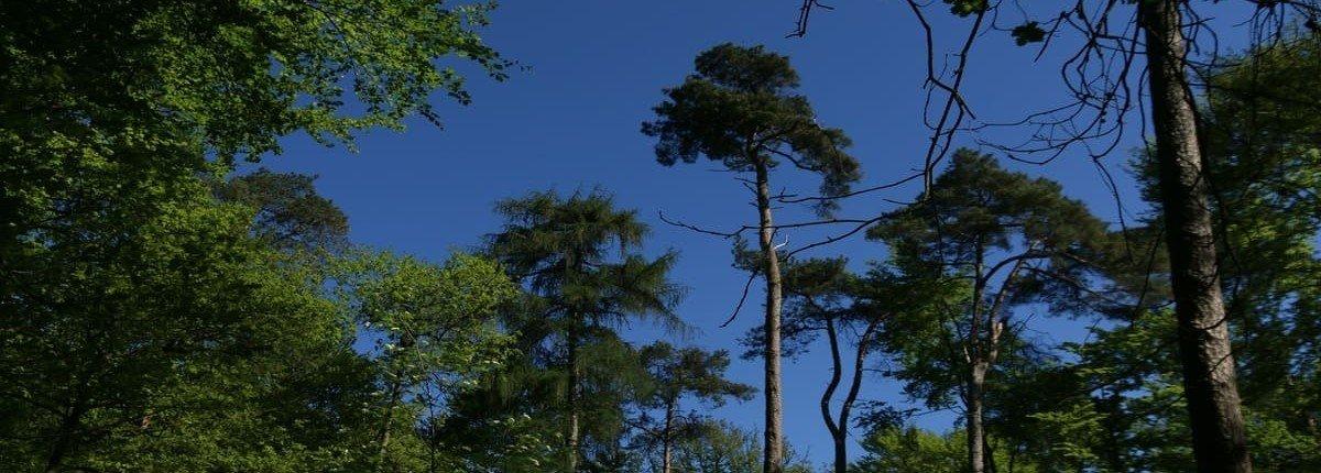 bomen-lucht-filosofisch-wandeling