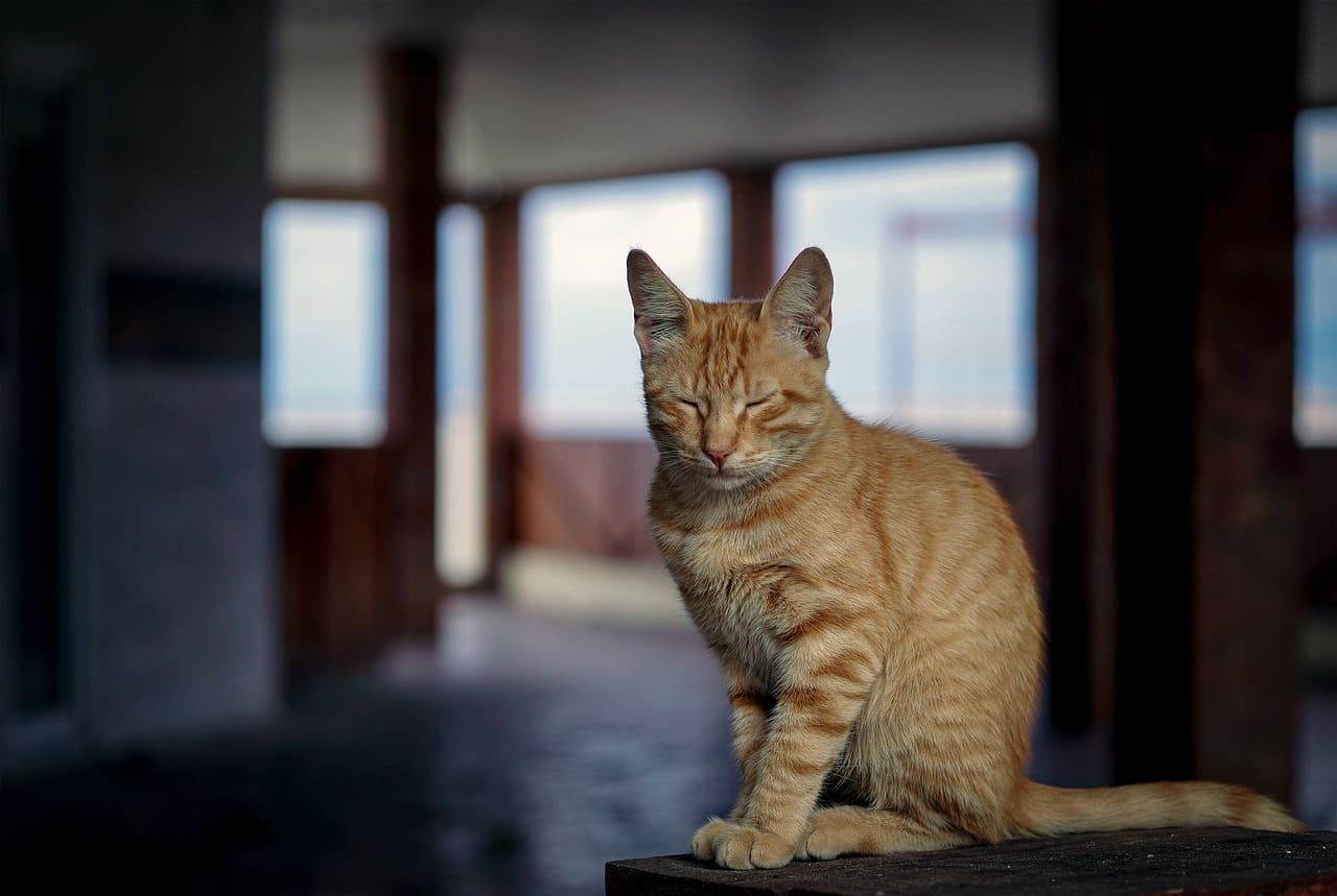 kat-ogen-gesloten-vermoeidheid