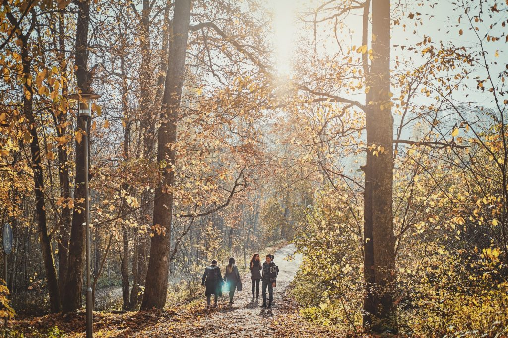 Group of young people are walking at the forest